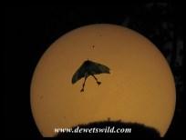 Swadini nightlife