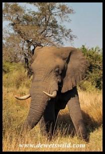 Elephant, Kumana