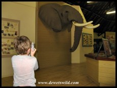 No visit to Northern Kruger would be complete without visiting the Elephant Hall at Letaba