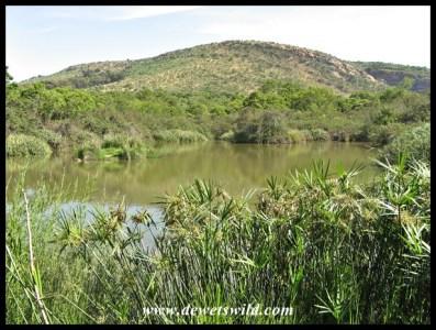 Sasol Dam from the Bird Hide
