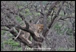 Cubs in the tree