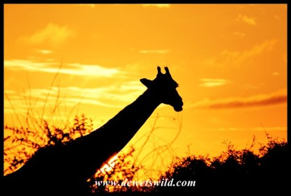 Lower Sabie sunrise