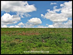 Midlands greenery