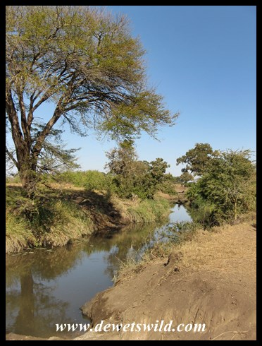 Gwini stream