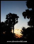 Pafuri sunset