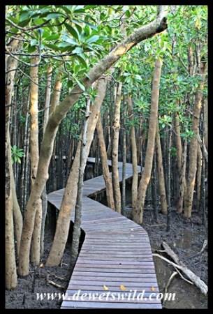 Mangrove boardwalk at Umlalazi