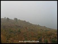 Lenong shrouded in thick fog