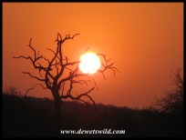 Sunrises and sunsets at Olifants can be spectacular in the extreme