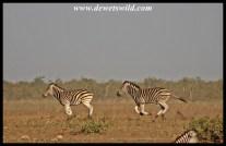 Chasing each other around at Tinhongonyeni