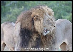 Kings of Addo