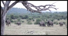 Elephant herd on the move