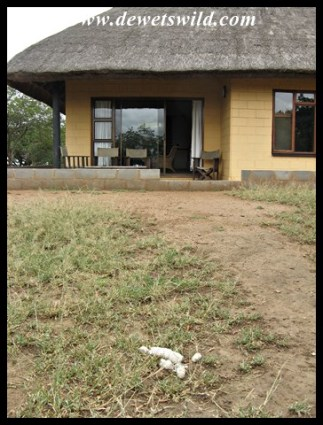 Yes, that is lion scat lying in front of our veranda...