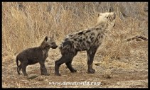 Spotted Hyena cousins
