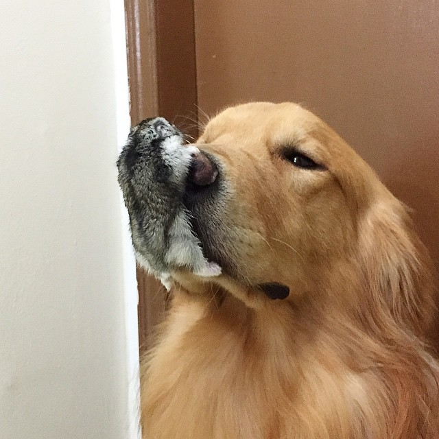 A_Dog_8_Birds_And_A_Hamster_Are_The_Most_Unusual_Best_Friends_Ever7