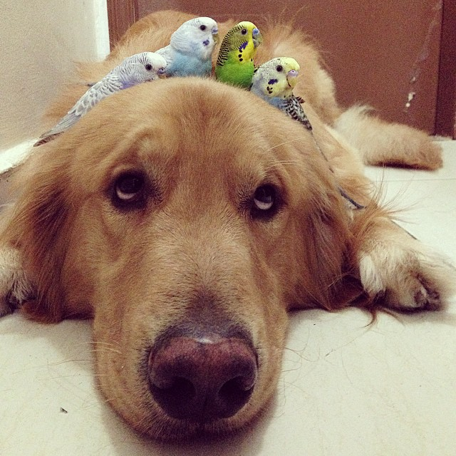 A_Dog_8_Birds_And_A_Hamster_Are_The_Most_Unusual_Best_Friends_Ever19