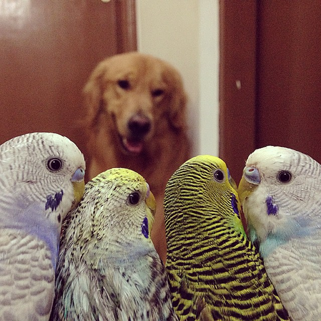 A_Dog_8_Birds_And_A_Hamster_Are_The_Most_Unusual_Best_Friends_Ever8