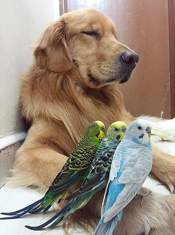 A_Dog_8_Birds_And_A_Hamster_Are_The_Most_Unusual_Best_Friends_Ever18