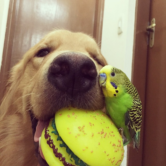 A_Dog_8_Birds_And_A_Hamster_Are_The_Most_Unusual_Best_Friends_Ever13