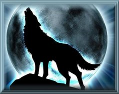 Lobos da Noite
