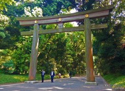 Yoyo-gi Park, Meiji Shrine