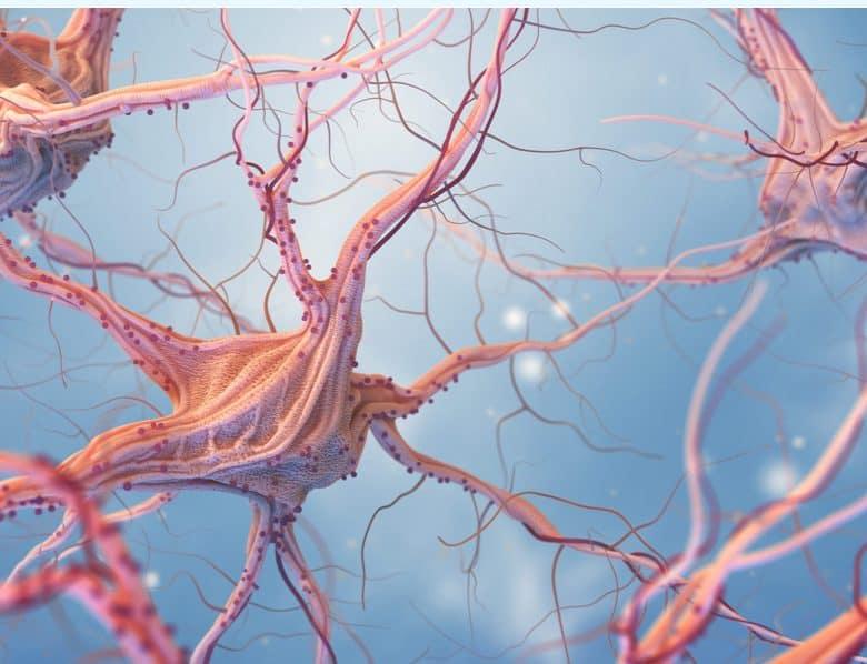 Nerve - Synapse XT capsules 2020