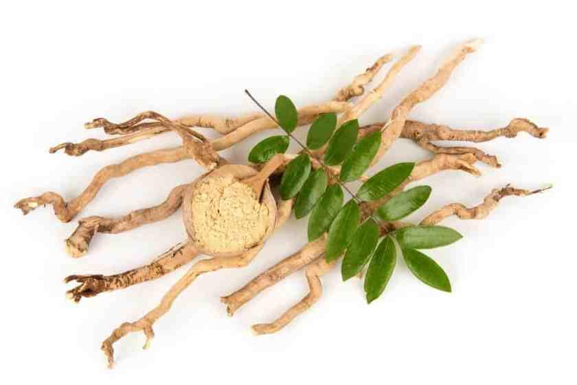 Eurycoma Longifolia Root Extract