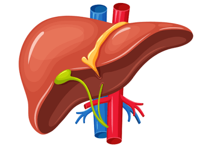 Liver Health Working