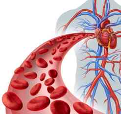 CircuBoost Blood flow - Working