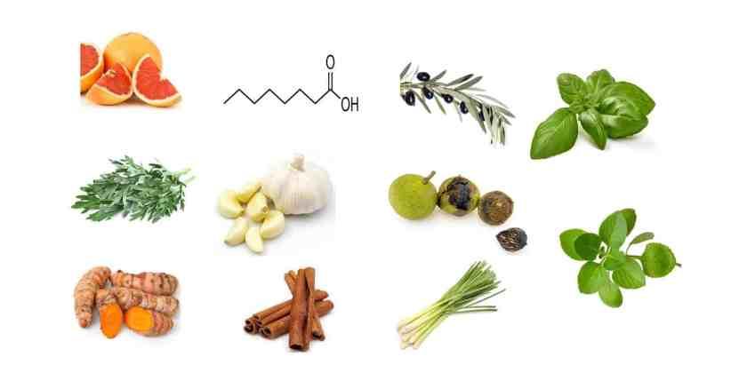 Fungus Hack Ingredients