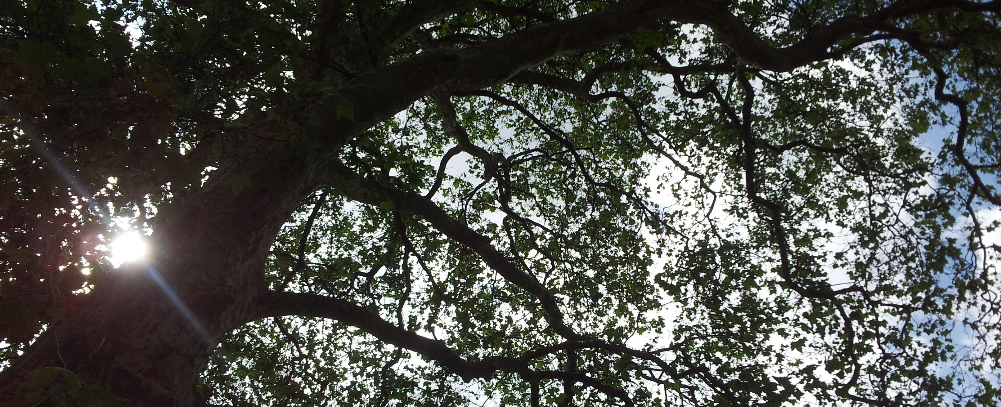 Lyrik: Wie ein Baum