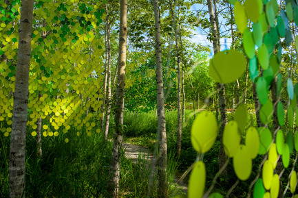 Press kit   837-13 - Press release   Participatory Gardens for the 16th International Garden Festival - International Garden Festival / Reford Gardens - Landscape Architecture -         POPPLE (2015) <br>Meaghan Hunter &amp; Suzy Melo<br><br>Winnipeg (Manitoba) Canada<br><br>Sponsor: Manitoba Association of Landscape Architects<br>         - Photo credit: Martin Bond