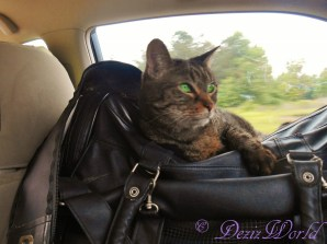 Lexi rides in her travel carrier home from BlogPaws Nashville