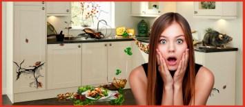 тараканы-на-кухне