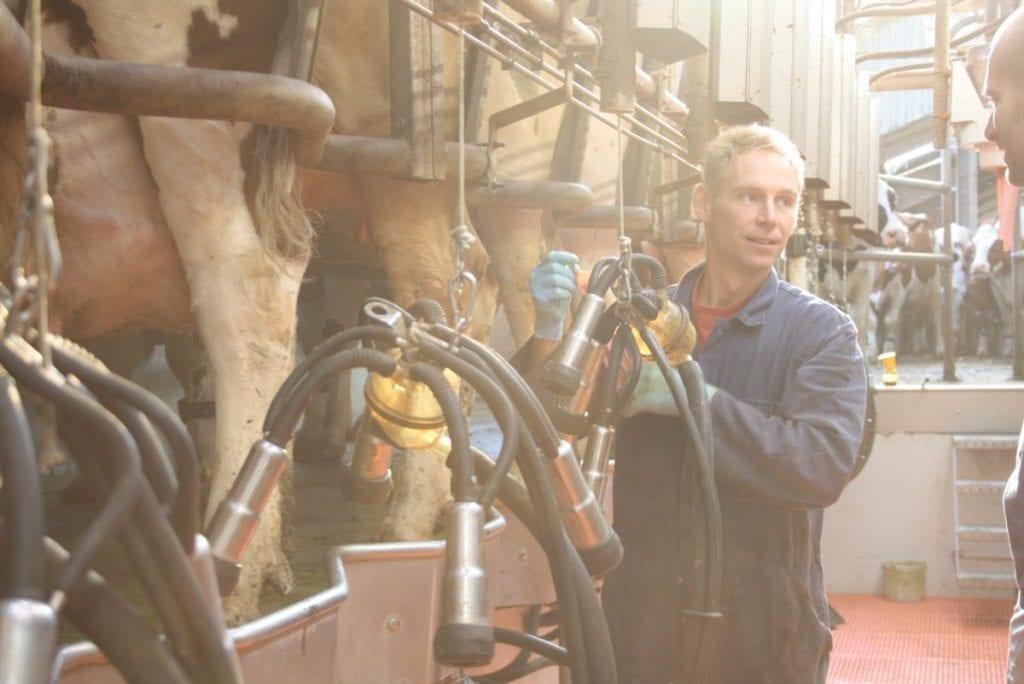Farmer, milking, milking parlor