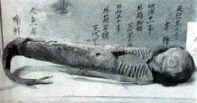 kashiwazaki-sirena