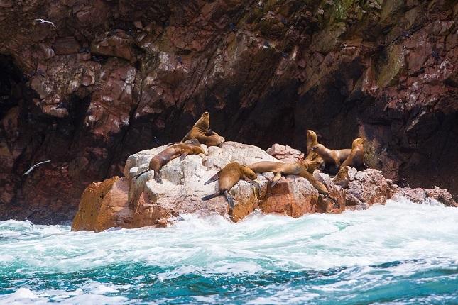 Top 10 Peru Highlights: Bei einer Bootstour zu den Ballestas Inseln kann man Selöwen beim Sonnenbaden beobachten.