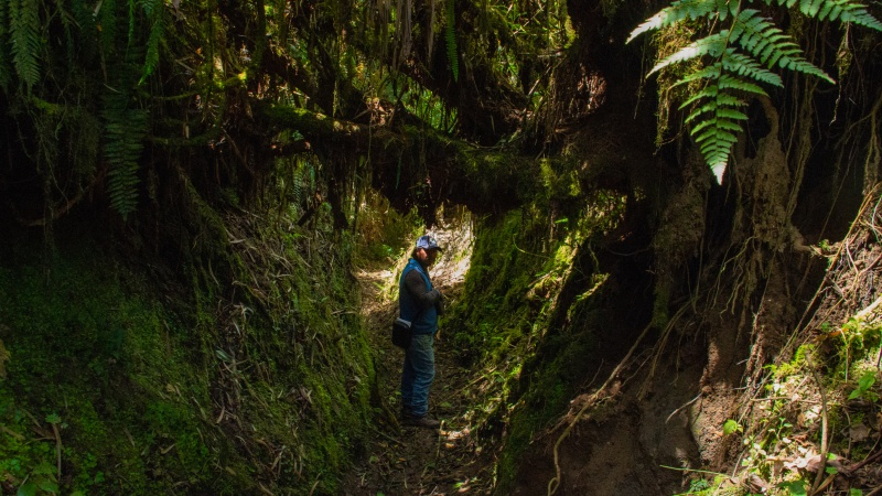Die Culuncos sind ein riesiger Netz aus uralten Schmugglerpfaden, die sich tief durch den Nebelwald ziehen.