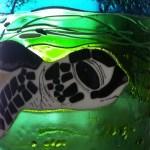 Baby turtle, 4