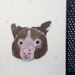 Raimundo, 1a, kangaroo