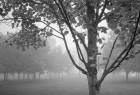 Maples in Fog I