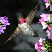 Hummingbird Number 5 Outdoor Wall Art Piece West Of