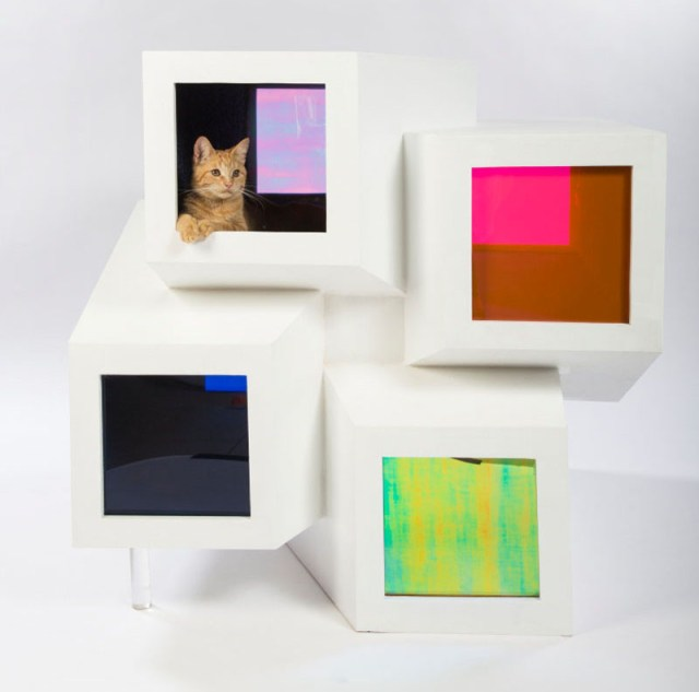 gatos 9