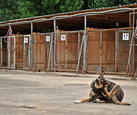 Elizbarishvili_dog_shelter