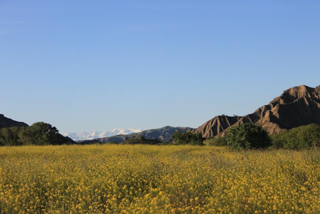 Blooming fields in spring.