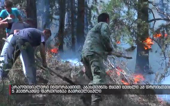 Abastumani forest fire