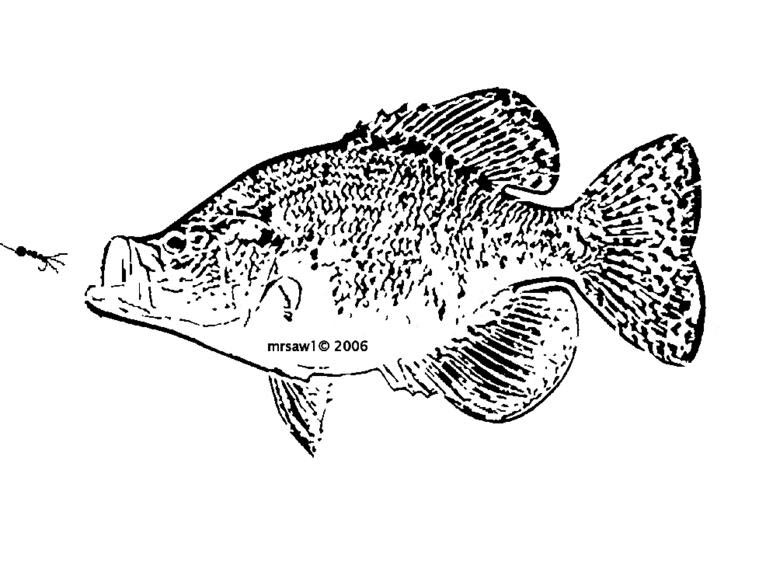 Crappie Fish Drawing