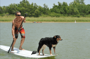 Paddleboard-Racing-with-your-Dog