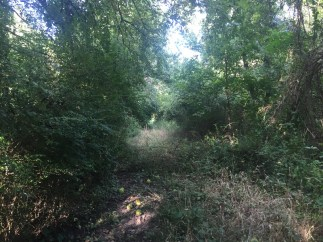 Trail at Cottonwood Creek Preserve in Wilmer Texas