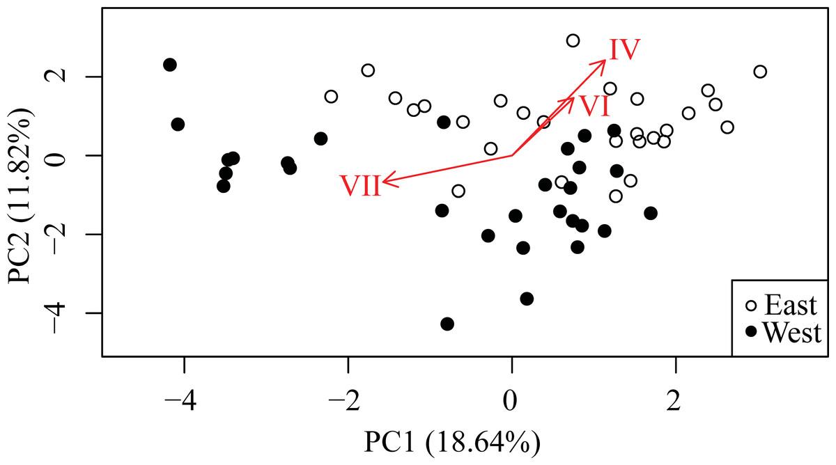 Quantifying cryptic Symbiodinium diversity within