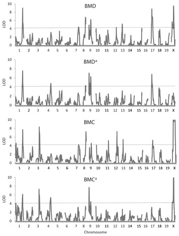 Quantitative trait loci for energy balance traits in an